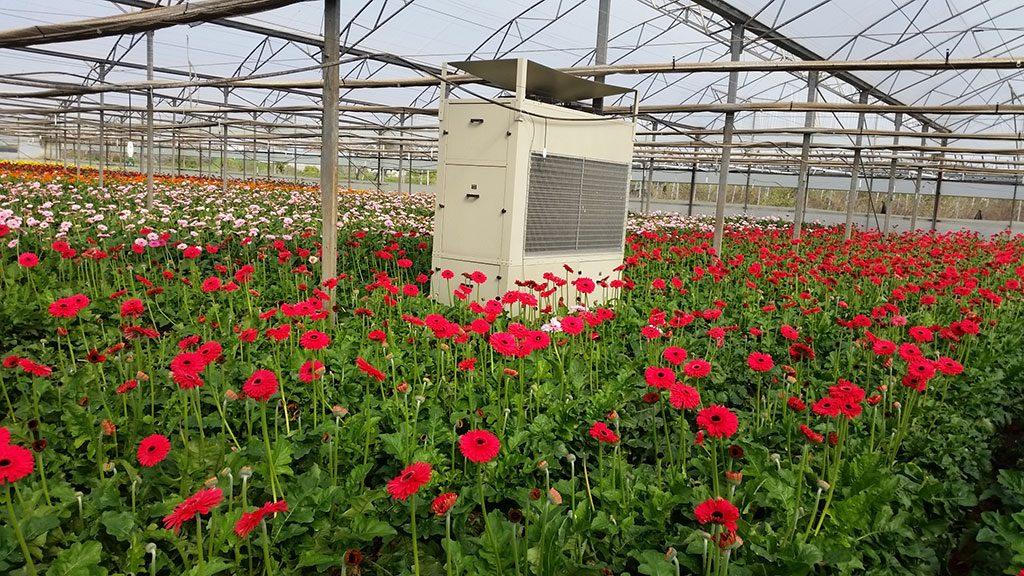 Bellpark Horticulture Announces DryGair Partnership