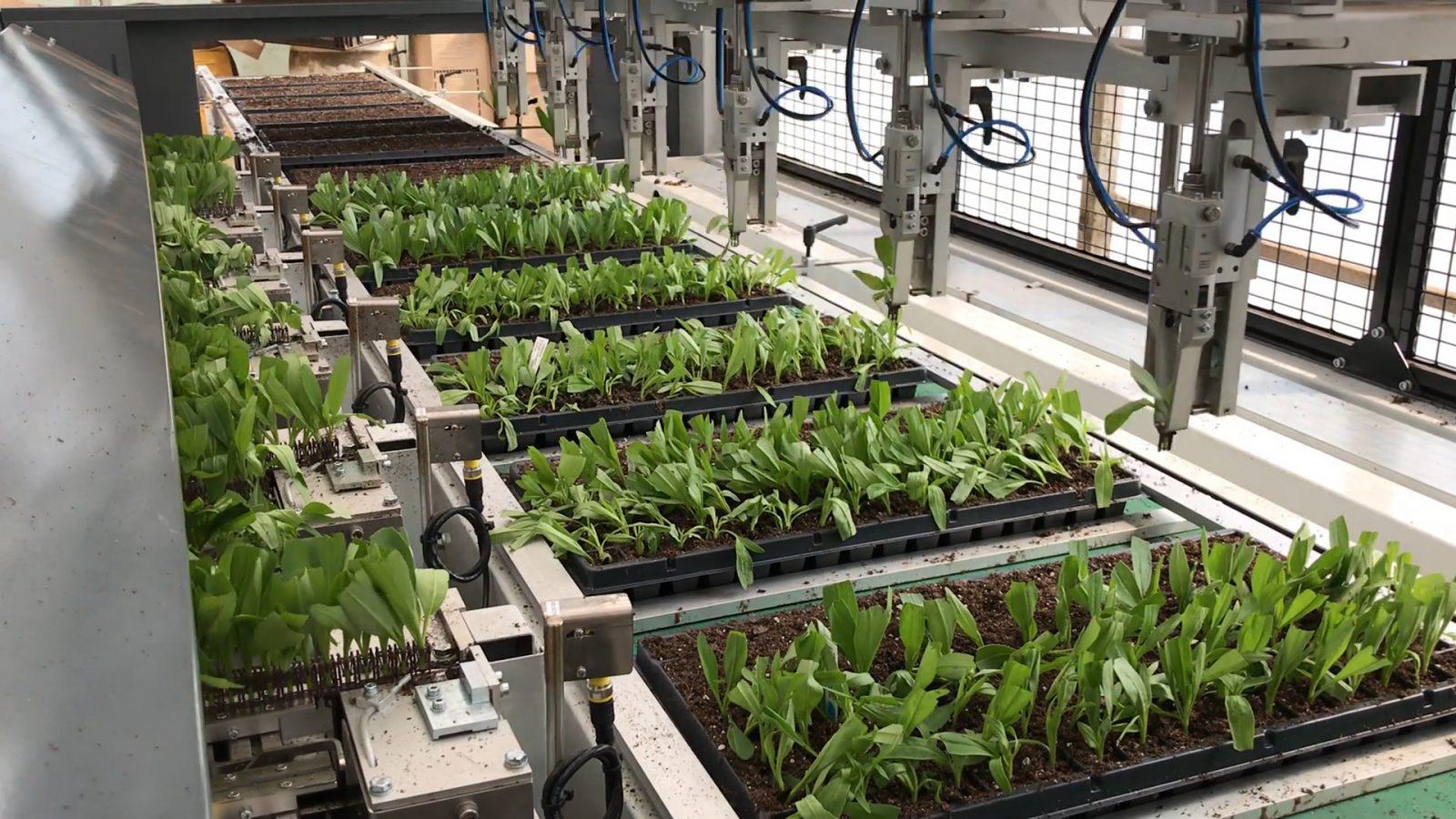 Hampshire Farms - Visser AutoStix